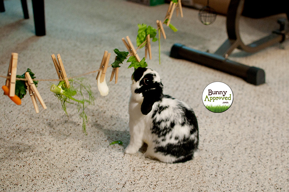Toys For Bunnies : Bunny logic rabbits are smart approved